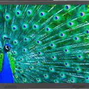 resizedimage586375-activpanel-touch-mount480x3080913web_2