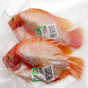 QRCode_FishID-300x300